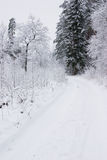 Snowy road in forest. Forest road  with white snow in winter Royalty Free Stock Image