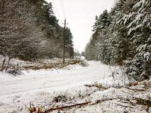 Snowy Road in Forest. Snowy curved Road with Electricity Poles  in lithuanian Winter Pine Forest Royalty Free Stock Photos