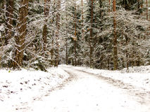 Snowy Road in Forest. Snowy curved Road in lithuanian Winter Pine Forest Stock Photo