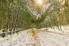 Snowy road in the forest. Empty snowy road and snowy landscape in the forest Stock Photos