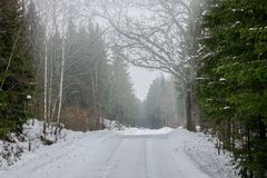 A snowy road in the forest royalty free stock image