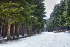 Snowy road in the forest Royalty Free Stock Photography