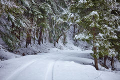 Snowy road in the forest Royalty Free Stock Images
