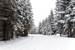 Snowy road in the forest Stock Photo