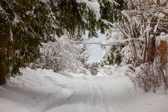 Snowy road in the forest. `winter` ` forest` `daytime ` ` road ` ` snowdrifts ` `cold Royalty Free Stock Image
