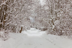 Snowy road in the forest. `winter` ` forest` `daytime ` ` road ` ` snowdrifts ` `cold Stock Image