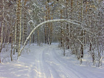 Snowy road in the forest Stock Photos