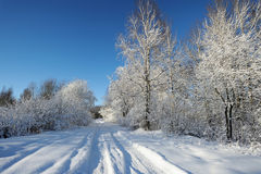 Snowy road in the forest in winter. White fluffy snow, the road, the footprints of the wheels and treads in the snow. Blue sky, snow covered trees. The winter Stock Photos