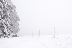 Snowy road lined with trees across the plain Stock Photos