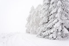 Snowy road lined with trees across the plain Stock Images
