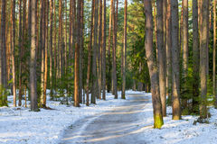 Snowy road in a mixed forest Stock Photos