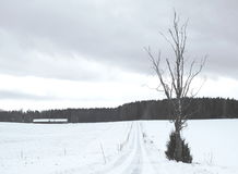 Snowy road. A snowy narrow road at the Swedish countryside Royalty Free Stock Photo