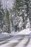 Snowy Road near Forest. Road in snow covered forest, Northern California Royalty Free Stock Image
