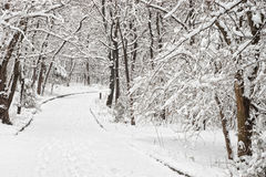 Snowy road in park Royalty Free Stock Image