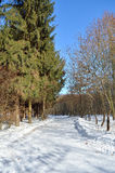 Snowy road among pine trees in the winter forest Royalty Free Stock Photo
