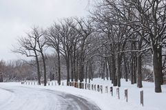 Snowy Road. Snow covers trees along a country road Royalty Free Stock Image