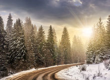 Snowy road through spruce forest at sunset. Winter mountain landscape. winding road that leads into the spruce forest covered with snow in evening light stock photography