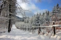Snowy Road Through A Sunny Forest. Royalty Free Stock Photos