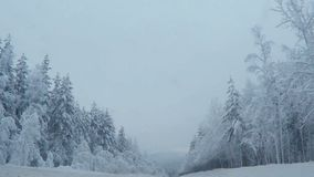 Snowy road surrounded by pine trees stock video footage