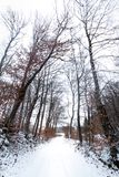 Path covered with snow surrounded by reddish trees by autumn. Winter landscape. stock images