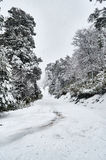 A snowy road surrounded by a snowy forest Stock Photo