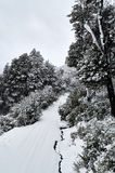 A snowy road surrounded by a snowy forest. A snowy road surrounded by a beautiful snowy forest viewed while ascending in the funicular in the Bayo Hill, in Villa Stock Image