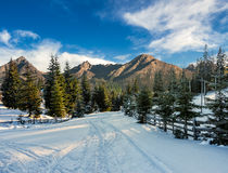 Snowy road to coniferous forest in mountains. Winter mountain landscape. road that leads into the pine forest covered with snow stock photography