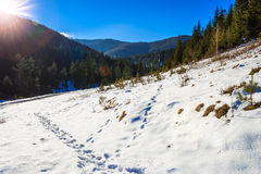 Snowy road to coniferous forest in mountains Royalty Free Stock Photo