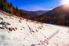 Snowy road to coniferous forest in mountains Stock Photography