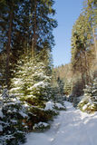 Snowy road to coniferous forest in Sunny day stock images