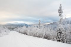 Snowy road to far mountains. Frozen empty road to far mountains. Some polar pines on road side. Lower rose clouds stock photos