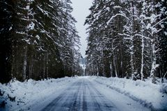 Snowy Road Between Trees Royalty Free Stock Images