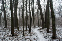 Snowy road among trees in the dark foggy winter forest Royalty Free Stock Photos