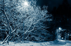 Snowy road and trees at night Stock Photography