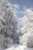 Snowy road trough the woods. View at the snowy road leading between the fresh snow covered trees Stock Photography