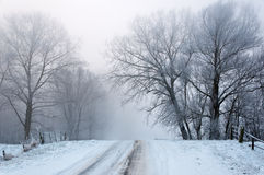 A snowy road up between the trees Royalty Free Stock Photography