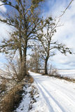 Snowy Road, Winter Stock Images