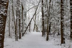 Snowy road in the winter forest royalty free stock photos