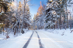 Snowy road in winter forest. Of Poland Royalty Free Stock Photo