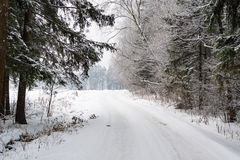 Snowy road in winter forest in cloudy winter day Stock Image