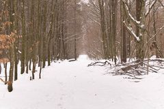 Snowy road in the winter forest. The concept of winter.  royalty free stock image