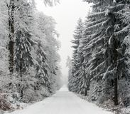 Snowy Road Through Winter Forest, Czech Republic Royalty Free Stock Images
