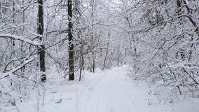 Camera flies through winter forest among the snow-covered tree branches stock footage