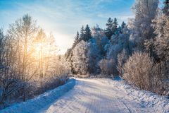 Snowy road in winter forest Stock Photography