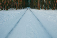 Snowy road in winter pine forest Royalty Free Stock Photos