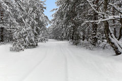 Snowy road in the winter. Snowy road in the winter woods on a background of clear sky royalty free stock photography