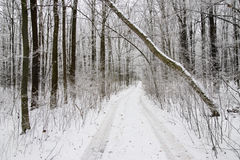 Snowy road in wintry forest Royalty Free Stock Photography