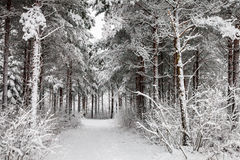 Snowy Road through the wintry forest Royalty Free Stock Photos