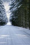 Snowy road in a wood Stock Photography