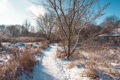 Snowy rural path with animal tracks. Leading away across open countryside in a winter landscape under a blue sunny sky Royalty Free Stock Photography